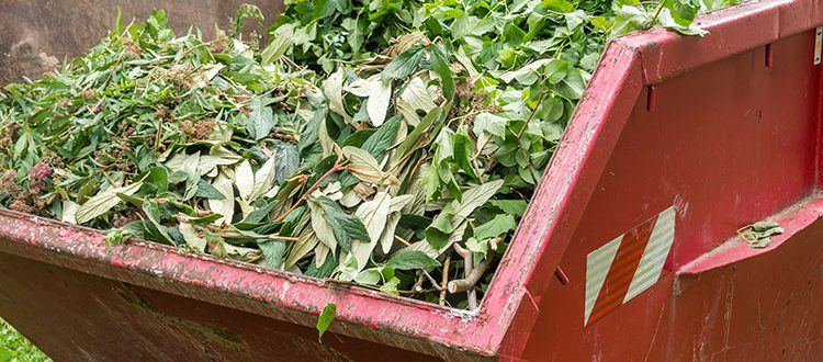 green waste summer skip bin