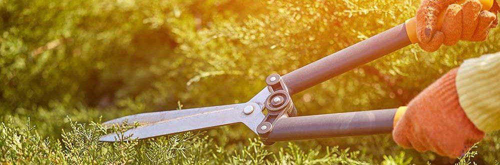 gardening tips australia in winter